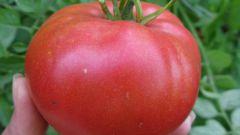 Как вырастить крупные помидоры: полезные советы