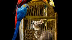 Какого попугая лучше выбрать