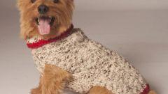 Как связать свитер для собачки