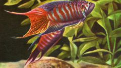 Как правильно контролировать жизнь аквариума