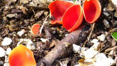 Какие грибы собирают весной