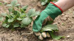 Как ухаживать за огородом в июне