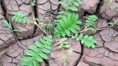 Как облегчить уход за растениями на глинистых почвах