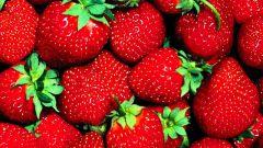 Как вырастить крупную и вкусную клубнику на огороде