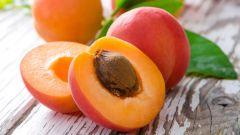 Как из косточки вырастить абрикосовое дерево