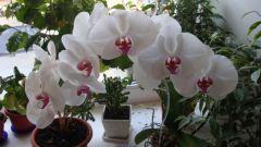 Как ухаживать за орхидеей: 5 секретов