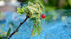 Как защитить урожай от птиц