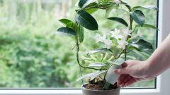 Виды подкормки для комнатных растений
