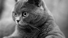 Как пристроить кота в хорошие руки через интернет