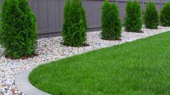 Как скашивать газон