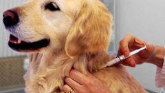 Стоит ли делать прививки животным: мифы и реальность