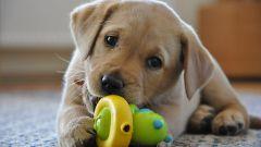 Как вырастить идеальную собаку