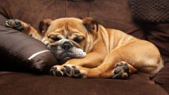 Сколько часов в день должна спать собака