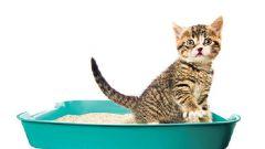 Почему кот не пользуется лотком
