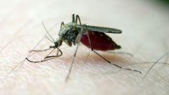 Как уменьшить зуд от комариных укусов