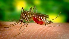 Как защитить малыша от укусов насекомых