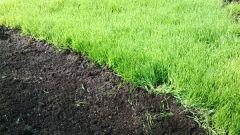 Когда сеять сидераты и когда их закапывать осенью