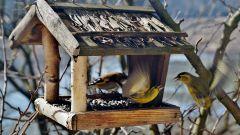 Как сделать кормушку для птиц своими руками из дерева