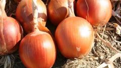 Как подготовить лук к хранению в домашних условиях