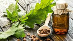 Как использовать кору дуба при заболеваниях десен и ротовой полости