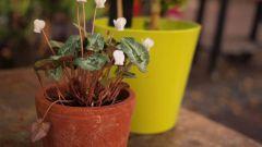 Как пересаживать комнатные растения осенью