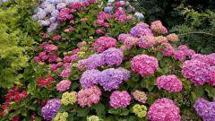Какие бывают удобрения для цветов