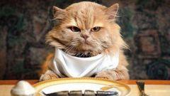 Сколько раз в день кормить кошку: городскую и деревенскую