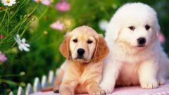 Как выбрать домашнее животное в квартиру