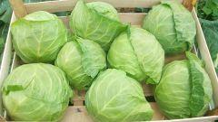 Как правильно хранить белокочанную капусту в свежем виде