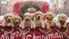 Как добиться успеха в год Собаки