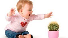 Как выбрать растения для детской комнаты