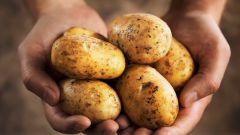 Чем полезен картофель - состав и полезные свойства