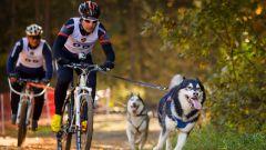 Как выбрать собаку для спортивных занятий