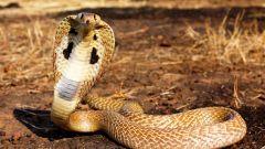 Какие опасные для туриста животные водятся в Таиланде