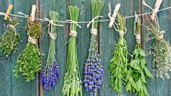 Как сохранить ароматические травы