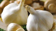 Как используют чеснок в кулинарии