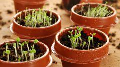Что сеять на рассаду в феврале