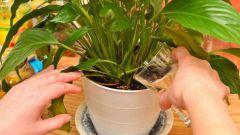Как приготовить удобрение из банановой кожуры