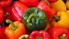 Как подготовить семена перца для посадки на рассаду