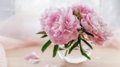 Какие 10 комнатных растений приносят счастье и удачу в дом