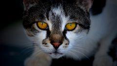 Как приучить кошку к слову «нельзя»