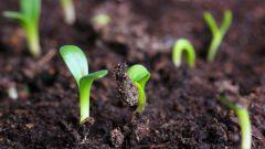 Когда высевать семена на рассаду по Лунному календарю в феврале 2018 года