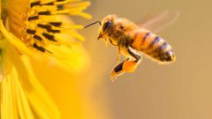 Как привлечь пчёл на свой дачный участок