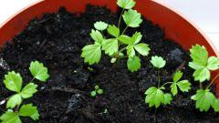 Как сажать семена клубники на рассаду