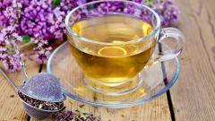 Как заготовить душицу для чая на зиму (полезные свойства душицы)