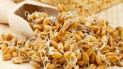 Как прорастить пшеницу