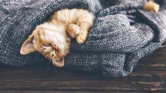 Как расслабиться и быстрее заснуть