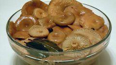 Маринованные волнушки: рецепты с фото для легкого приготовления