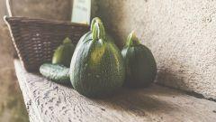 Закуски из кабачков: рецепты с фото для легкого приготовления