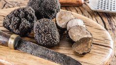 Трюфель - самый дорогой и самый необычный гриб